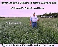 Your Going to get better yields with Agrovantage Amplify-D